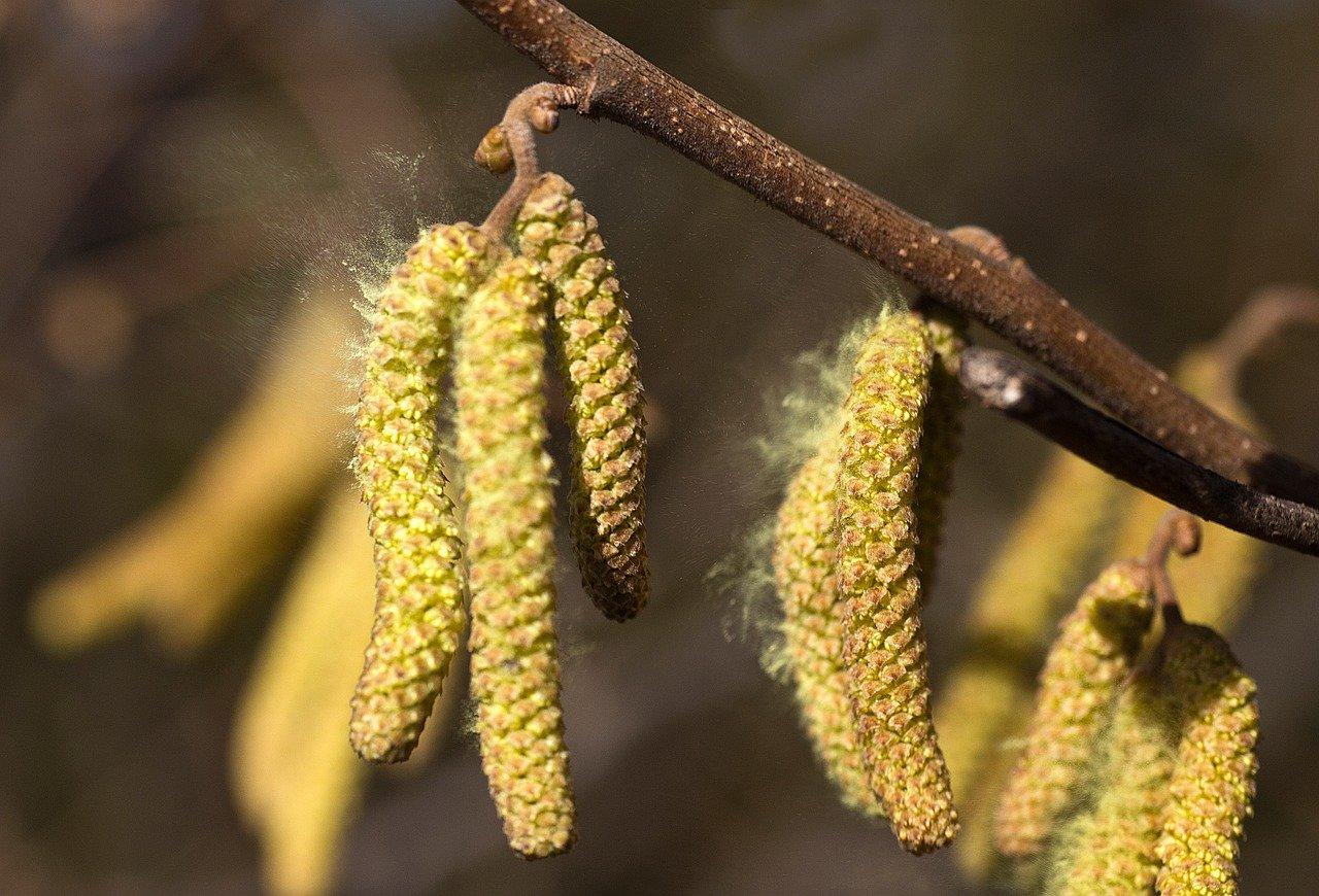Pollen Allergy Image