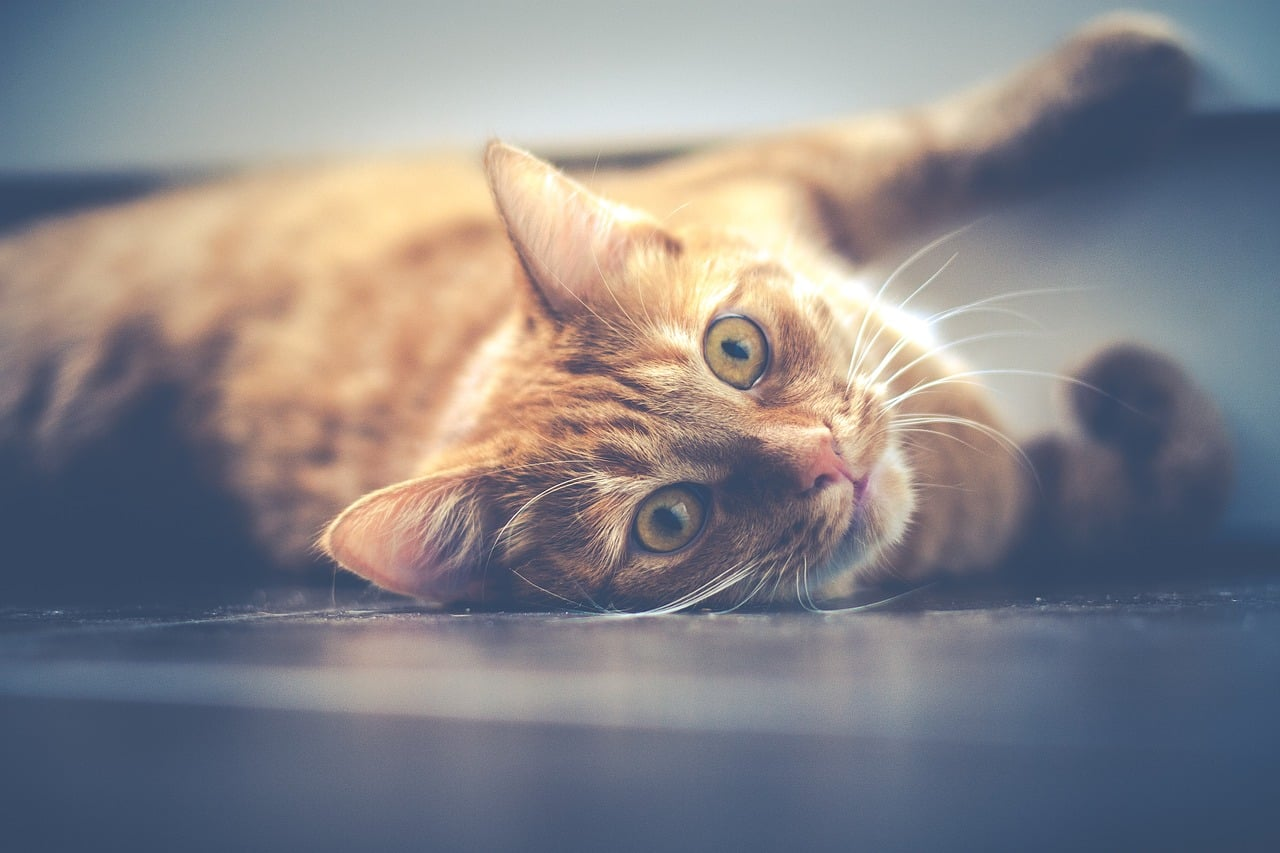 Cat Allergy: Symptoms, Causes, And Treatment Image